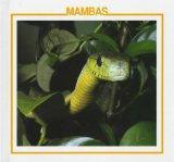 Mambas / Mambas (Amazing Snakes Discovery Library) (Spanish Edition)