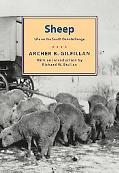 Sheep Life on the South Dakota Range
