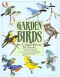 Garden Birds How to Attracts Birds to Your Garden
