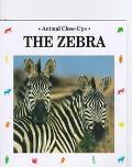 Zebra Striped Horse