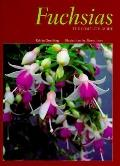 Fuchsias: The Complete Guide - Edwin Goulding - Hardcover