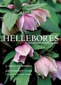 Hellebores A Comprehensive Guide