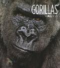 Living Wild - Gorillas