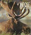 Living Wild: Moose