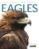 Amazing Animals: Eagles