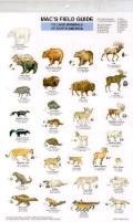 Mac's Field Guide to Land Mammals of North America