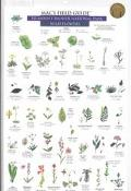 Mac's Field Guide to Mount Rainier National Park Flowers and Trees