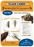 Flash Cards of Common Freshwater Invertebrates of North America Set One - Major Classes and ...