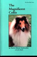 Magnificent Collie
