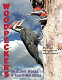 Woodpeckers: Drilling Holes & Bagging Bugs