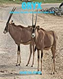 Oryx: Incredible Pictures and Fun Facts about Oryx