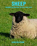 Sheep: Incredible Pictures and Fun Facts about Sheep
