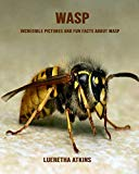 Wasp: Incredible Pictures and Fun Facts about Wasp