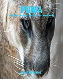 Puma: Incredible Pictures and Fun Facts about Puma