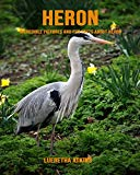 Heron: Incredible Pictures and Fun Facts about Heron