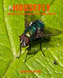 Housefly: Incredible Pictures and Fun Facts about Housefly