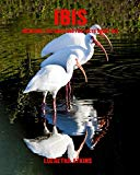 Ibis: Incredible Pictures and Fun Facts about Ibis