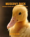 Muscovy Duck: Incredible Pictures and Fun Facts about Muscovy Duck