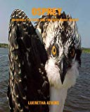Osprey: Incredible Pictures and Fun Facts about Osprey