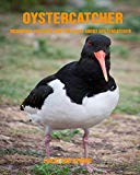Oystercatcher: Incredible Pictures and Fun Facts about Oystercatcher