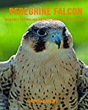 Peregrine Falcon: Incredible Pictures and Fun Facts about Peregrine Falcon