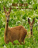 Roe Deer: Incredible Pictures and Fun Facts about Roe Deer
