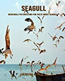 Seagull: Incredible Pictures and Fun Facts about Seagull