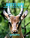 Antelope: Incredible Pictures and Fun Facts about Antelope