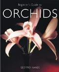 Beginner's Guide to Orchids