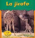 La Jirafa / Giraffe