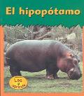 Hipopotamo / Hippoptamus