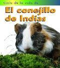 Conejillo De Indias/Guinea Pig