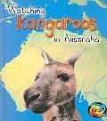 Watching Kangaroos in Australia