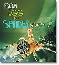 From Egg to Spider