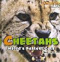Cheetahs World's Fastest Cats