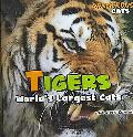 Tigers World's Largest Cats