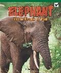 Elephant : From Trunk to Tail