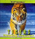 Tigers (Mighty Mammals)