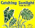 Catching Sunlight A Book About Leaves