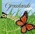 Grasslands Fields of Green and Gold