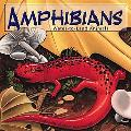 Amphibians: Water-to-Land Animals (Amazing Science)