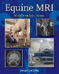 Equine MRI