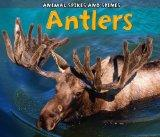 Antlers. Rebecca Rissman (Acorn Animal Spikes & Spines)