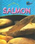 Life of a Salmon