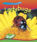 Ladybugs (Creepy Creatures)