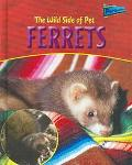 Wild Side of Pet Ferrets