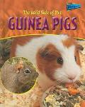 Wild Side of Pet Guinea Pigs