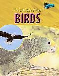 Wild Side Of Pet Birds