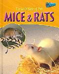 Wild Side Of Pet Mice And Rats