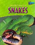 Wild Side Of Pet Snakes